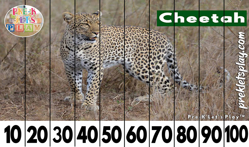 Preschool number puzzles of a cheetah for kids to practice skip counting by 10s from 10-100.
