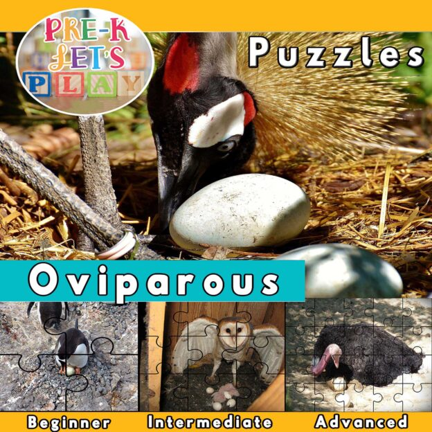 puzzle activities for preschool that focuses on the theme of oviparous animals.