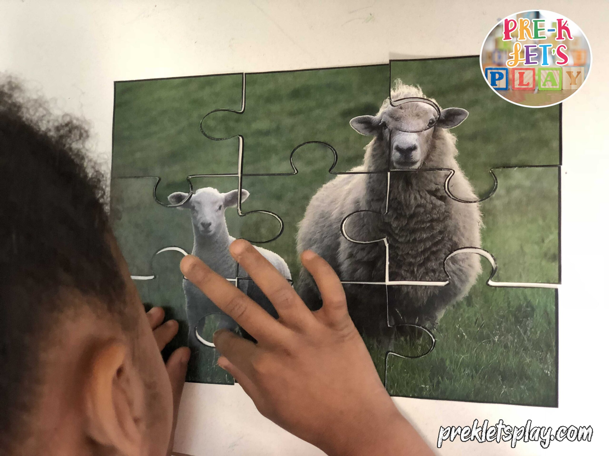 childing using their fine motor skills to fit this preschool picture puzzle of a sheep and their baby together.