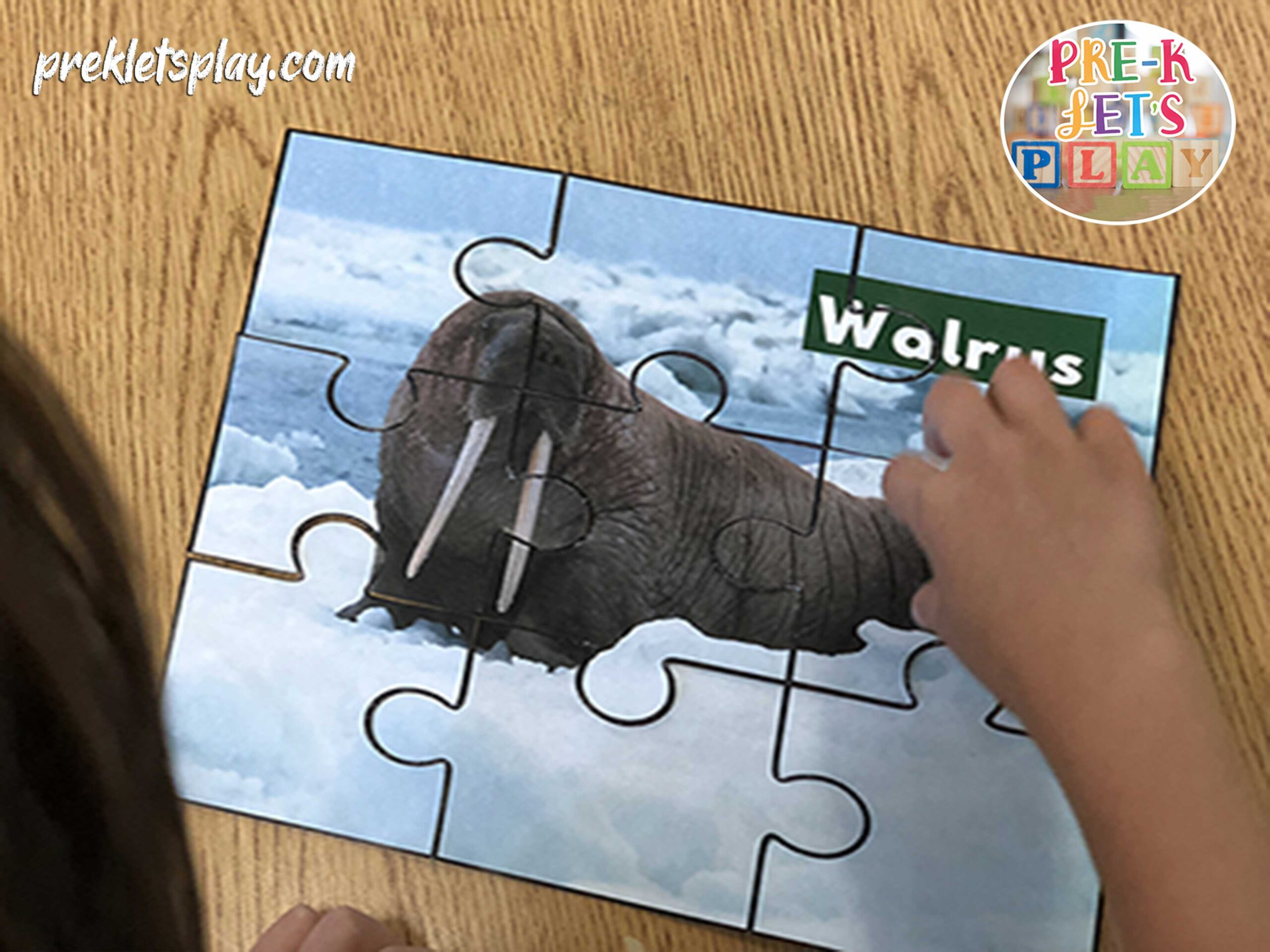 child finishing an arctic walrus animal picture puzzle printable.